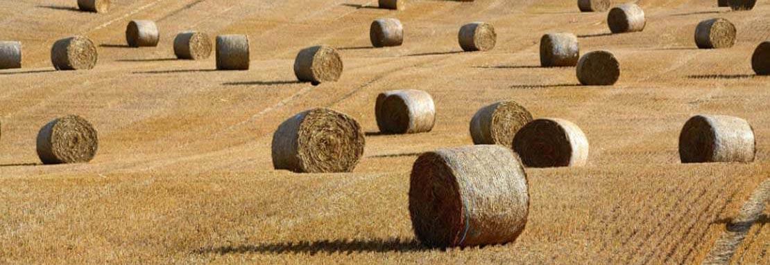 Industrija stočne hrane
