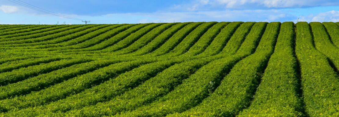 Landwirtschaft und Hortikultur